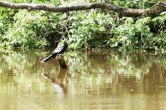 Anhinga Or Snakebird Resting Cuyabeno National Park Ecuador Stock Photos