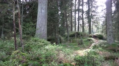 4k Dreamy autumn forest nature low mountain range Harz Stock Footage