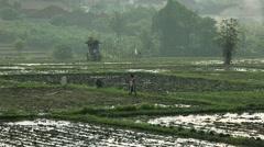 Ingathering of rice Stock Footage