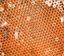honey comb and a bee working . - stock photo