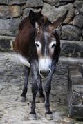 Donkey Stock Photos