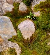 Stones in a moss - stock photo