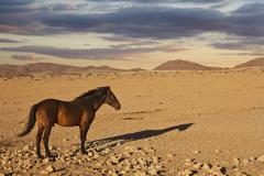 Horse desert namibia Stock Photos