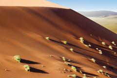 sossusvlei dunes shrubs - stock photo