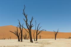 Stock Photo of Dead vlei namibia
