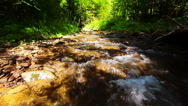 Stock Video Footage of mountain stream in the forest