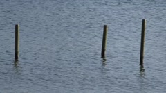 Three wooden posts sticking out of water Stock Footage
