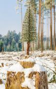 Stock Photo of Artificial fir in destroyed forest on the stump