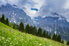 Meadow of grass and wildflowers - stock photo
