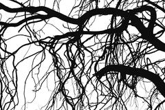 Tree silhouettes - stock illustration