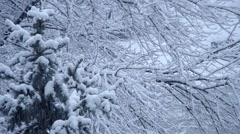 Snowfall and snowy tree Stock Footage