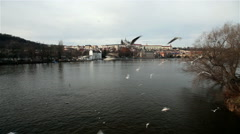 FEEDING BLACK-HEADED GULLS ON VLTAVA RIVER, PRAGUE, CZECH REPUBLIC Stock Footage