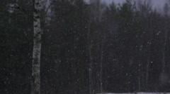 snow falls in slow motion background with pine and birch forest - stock footage