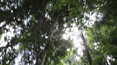 Looking up in the Jungle Stock Footage