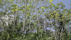 Trees in the Amazon jungle shot from a boat Stock Footage
