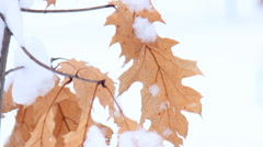 Maple leaves in the snow Arkistovideo