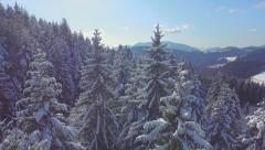 AERIAL: Snowy sprice forest in winter - stock footage