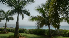 Caribbean Sea Palm Trees in Breeze Stock Footage
