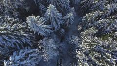 AERIAL: Flying directly above the snowy pine forest in winter - stock footage