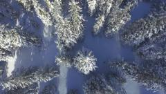 AERIAL: Footsteps in fresh snow leading through the winter forest - stock footage