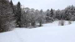 Forest in snow Stock Footage
