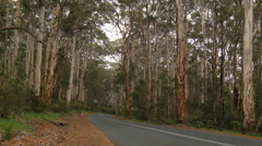 Road Through Boranup Forest in Western Australia Stock Footage
