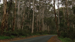 Road Through the Boranup Forest in Western Australia Stock Footage