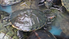 The tortoise in the aquarium for sale - stock footage