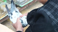 The selection of homing pigeons, in the three bird market Stock Footage