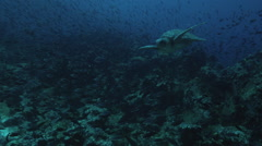 Sea turtle swimming around fishes in the ocean Stock Footage