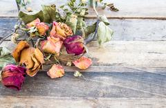 dry rose on wooden background - stock photo