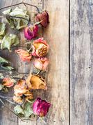 Dry rose on wooden background Stock Photos