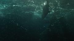 Fur seals swimming in ocean - stock footage