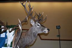 hunting exhibition - stock photo