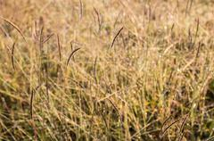 Fresh grass blurry background as morning sunlight Stock Photos