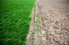 green agricultural and barren field - stock photo