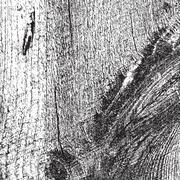 Very Grainy Wood Texture - stock illustration