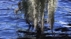 Spanish Moss Hanging Above River Water And Blue Waves Stock Footage