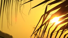 Early morning sun comes up through coconut trees at sunrise Stock Footage