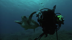 Sea turtle swimming underwater Stock Footage