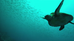Sea turtle swimming in ocean Stock Footage