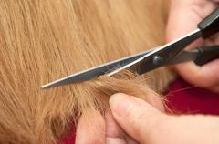 Stylist cutting split ends - stock photo