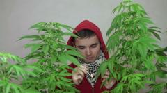 Casual man smoking Marijuana Stock Footage