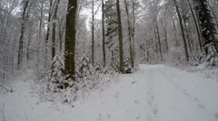Stock Video Footage of Beautiful winter forest, 360° (seamless loop)