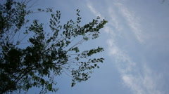 tree branches blowing in the wind - stock footage