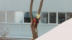 Lumberjack cutting tree urban city 1/4 Stock Footage