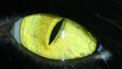 Black Cat's Eye Stock Footage