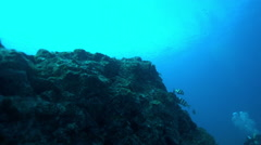 View of fishes and divers swimming near seabed - stock footage