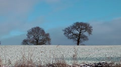 Snow covered field trees on skyline against wintry blue sky Stock Footage