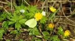 Butterflies of Germany Stock Footage